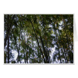 Bamboo Trees Greeting Cards