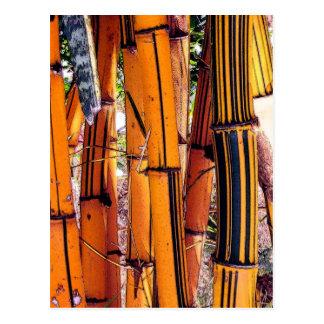 bambou2 postales