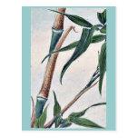 Bambú de la toma/Megata Ukiyo-e. Postales