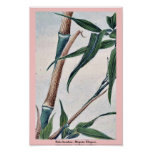 Bambú de la toma/Megata Ukiyo-e. Poster