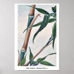 Bambú de la toma/Megata Ukiyo-e. Posters