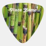 Bambú de Vietnam