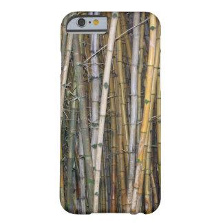 Bambú en Hilo, Hawaii Funda Barely There iPhone 6