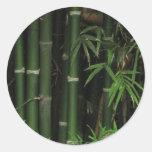 Bambú… FAO Rai, Nong Khai, Isaan, Tailandia