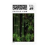 Bambú… FAO Rai, Nong Khai, Isaan, Tailandia Envio