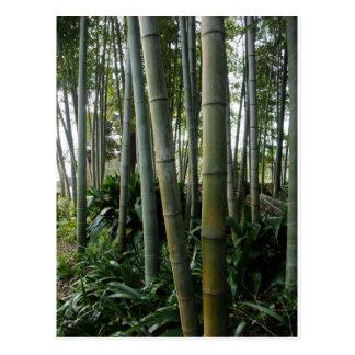 Bambú grande postal