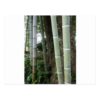 Bambú grande postales