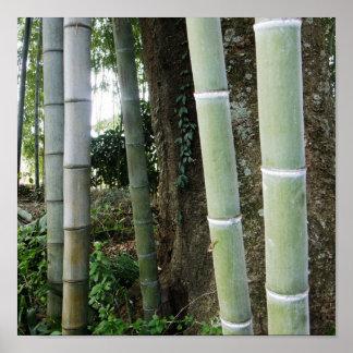 Bambú grande póster
