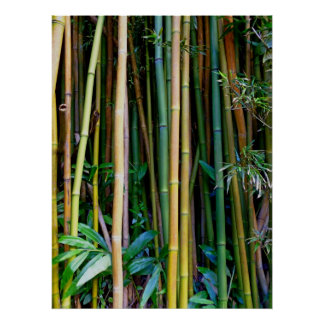 Bambú hawaiano poster