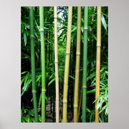 Bambú hawaiano póster