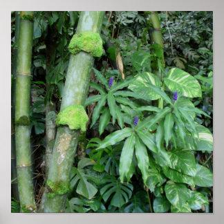 Bambú hawaiano y jengibre azul póster