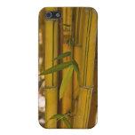 Bambú iPhone 5 Cobertura