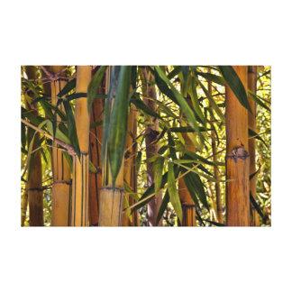 Bambú Lona Envuelta Para Galerias