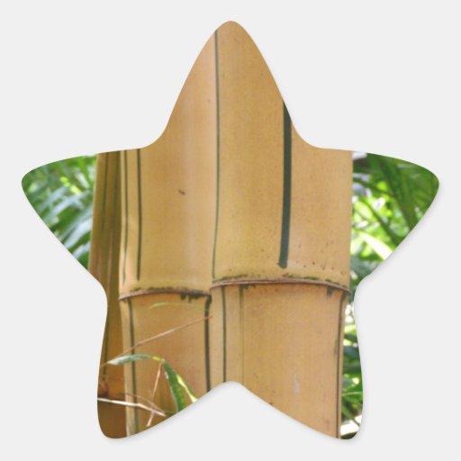 Bambú Colcomanias Forma De Estrella
