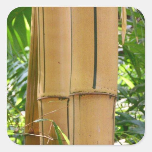 Bambú Colcomanias Cuadradass