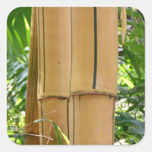 Bambú Calcomanía Cuadradas