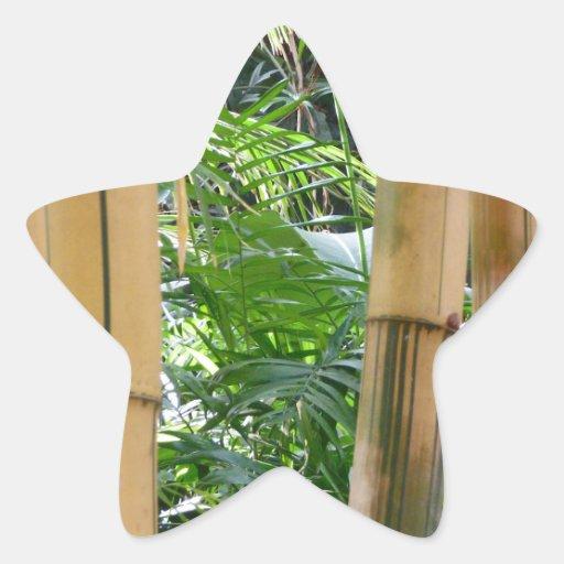 Bambú Calcomanías Forma De Estrellaes