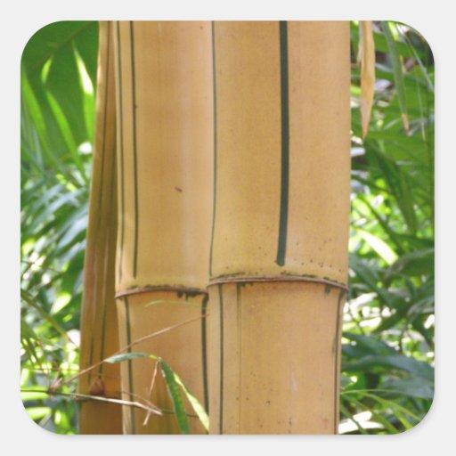 Bambú Calcomanía Cuadradase