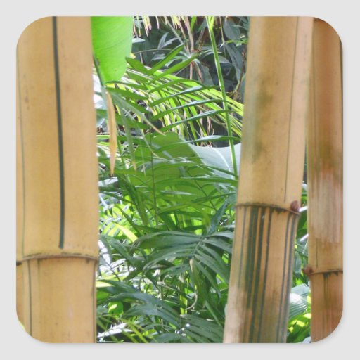 Bambú Pegatinas Cuadradas Personalizadas