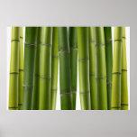 Bambú sereno impresiones
