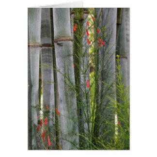 Bambú y flores tarjeta de felicitación