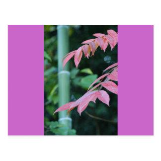 Bambú y hojas tarjeta postal