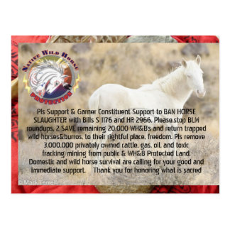 Ban Horse Slaughter and Save Wild Horses/ Burros Postcard