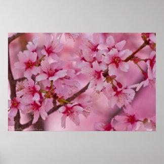 Bañado en poster japonés rosado de las flores de c