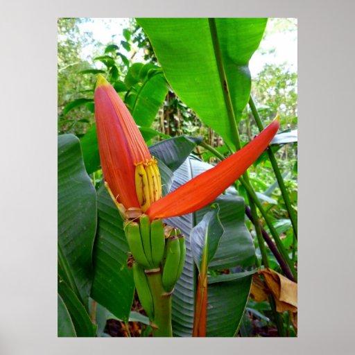 Banana Blossom Poster