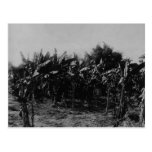 Banana Cultivation, Trinidad, c.1891 Postcard