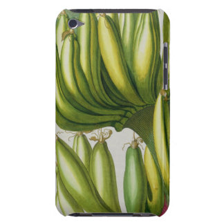 Banana, engraved by Johann Jakob Haid (1704-67) pl Barely There iPod Cover
