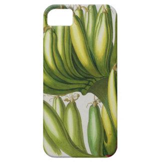 Banana, engraved by Johann Jakob Haid (1704-67) pl iPhone SE/5/5s Case