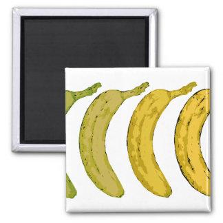 Banana Evolution 2 Inch Square Magnet