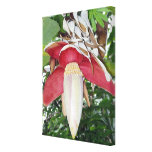 Banana Flower Stretched Canvas Print