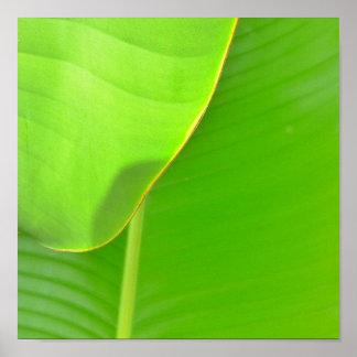 Banana Folds Poster