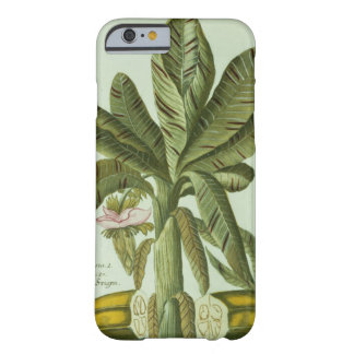 Banana, from J. Weinmann's Phytanthoza Iconographi Barely There iPhone 6 Case