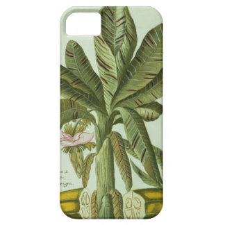 Banana, from J. Weinmann's Phytanthoza Iconographi iPhone 5 Covers