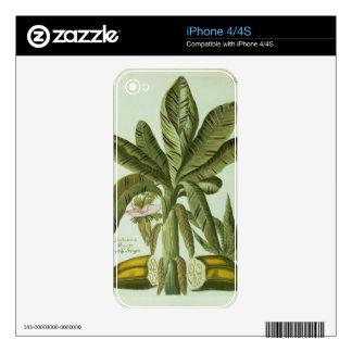 Banana, from J. Weinmann's Phytanthoza Iconographi iPhone 4 Skins