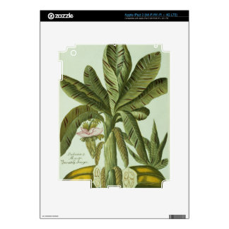 Banana, from J. Weinmann's Phytanthoza Iconographi iPad 3 Skin