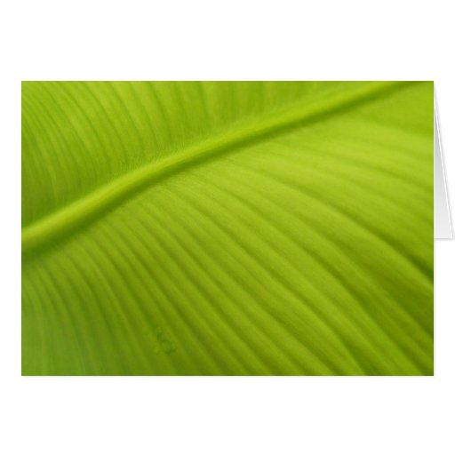 Banana Leaf Cards