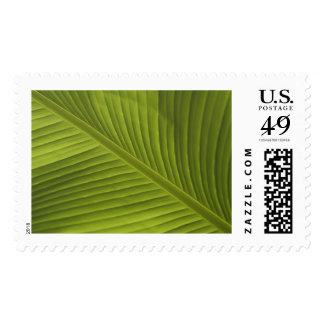 Banana Leaf Color Photo Detail, V002 Postage