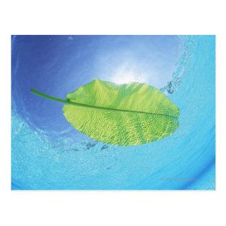 Banana leaf floating on the sea postcard