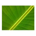 Banana Leaf Macro Postcards