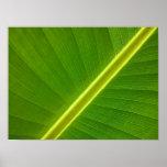 Banana Leaf Macro Posters