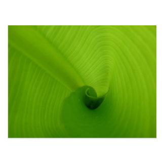 Banana Leaf Post Card