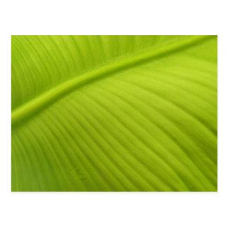 Banana Leaf Post Cards