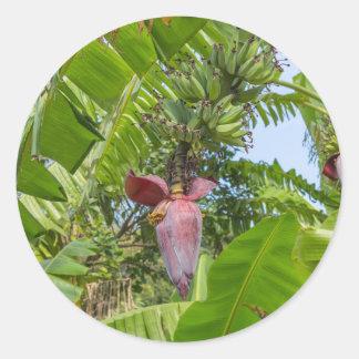 Banana plantation in Sok Kwu Wan Lamma Island Classic Round Sticker