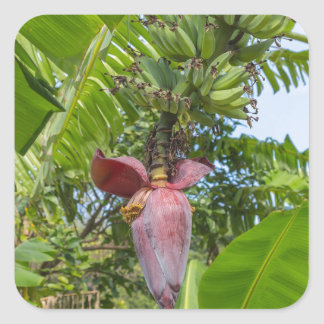 Banana plantation in Sok Kwu Wan Lamma Island Square Sticker