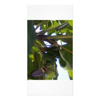 banana plants card