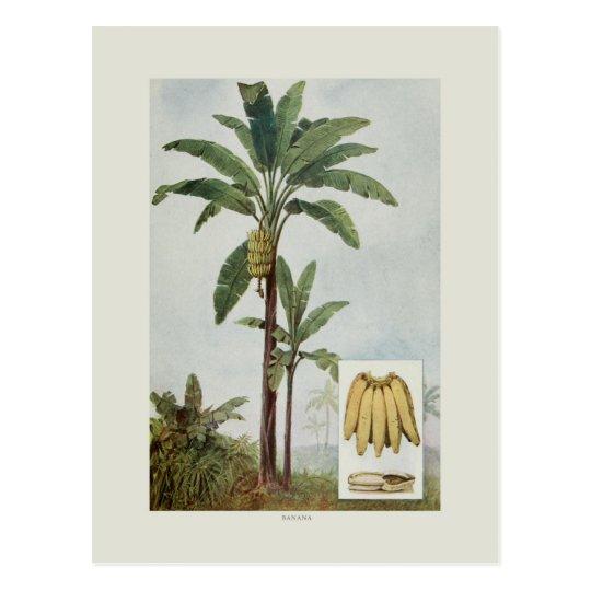 Banana Postcard